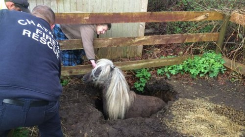 cute-10401 rescue-368 sinkhole-20 horse-1030 - 8310311680