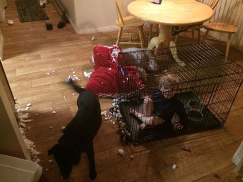 dogs kids parenting mess - 8310396160