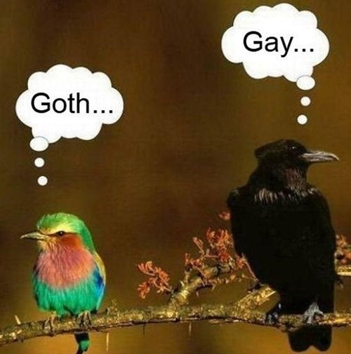 Birds – Goth and Gay