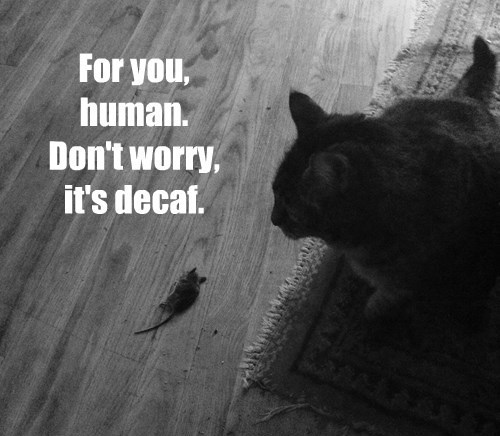 For you, human. Don't worry, it's decaf.
