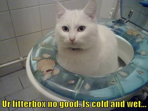 Ur litterbox no good. Is cold and wet...