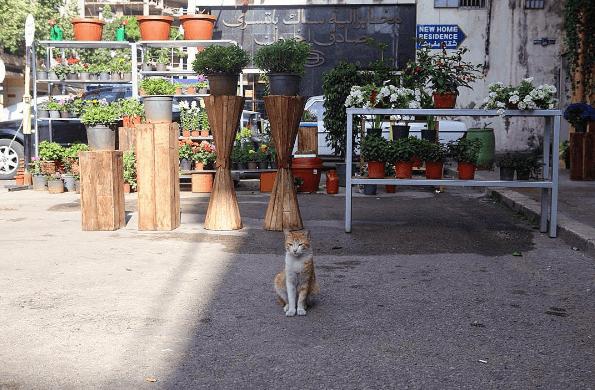 stray cat life