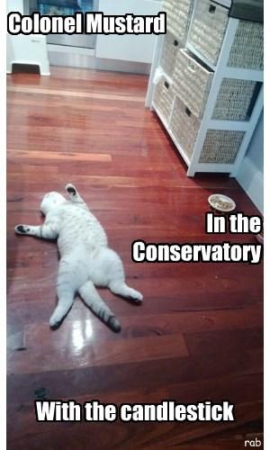 murder Cats clue - 8312520704