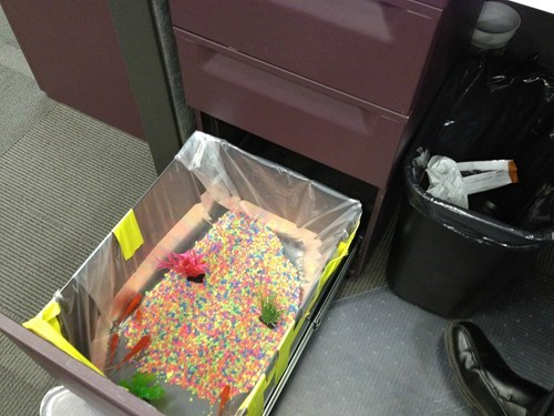 monday thru friday,cubicle prank,aquarium,prank,fish,cubicle,g rated