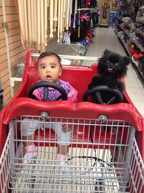 dogs kids shopping cart parenting - 8312872704