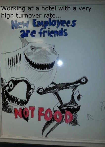 monday thru friday hotel hospitality whiteboard shark finding nemo