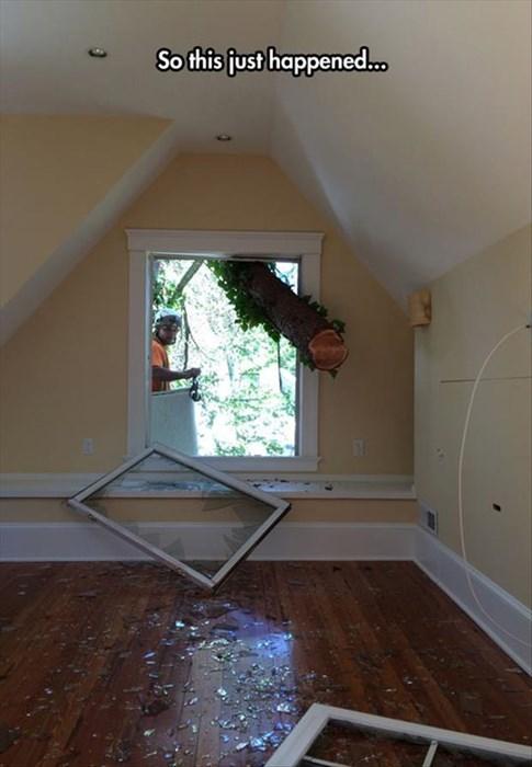 monday thru friday windows broken tree - 8312913408