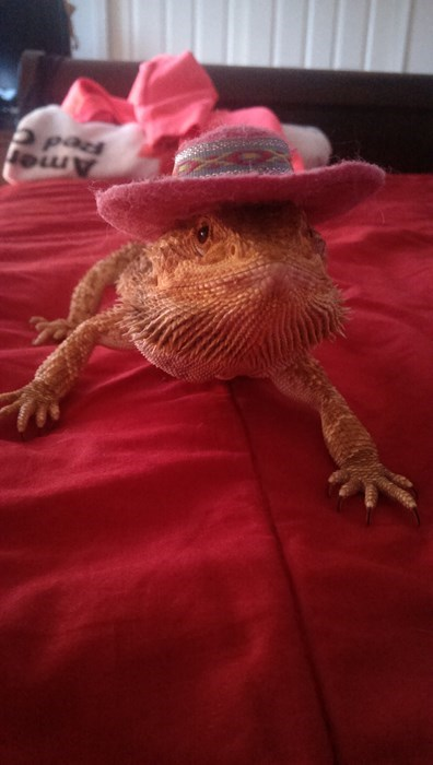 poorly dressed,lizard,hat