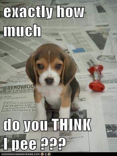 puppy how much pee caption - 8313070336