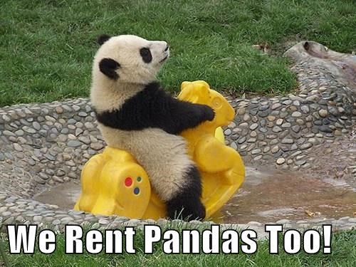 We Rent Pandas Too!