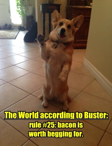 bacon dogs rules - 8313926144