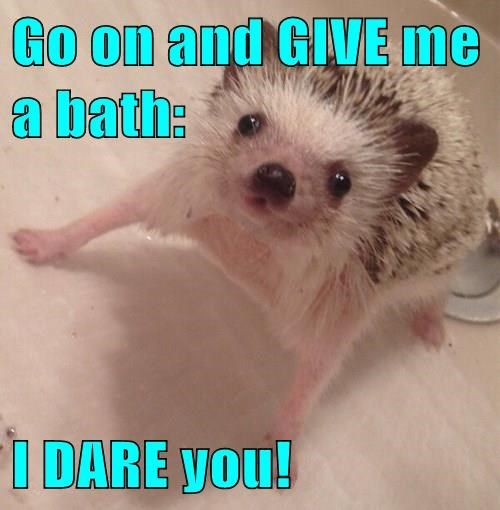 Go on and GIVE me a bath: I DARE you!