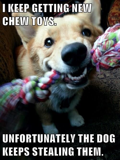 dogs,thief,toys