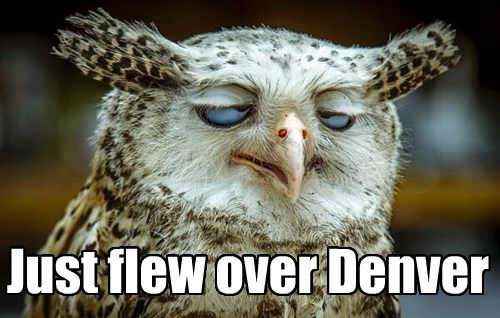 derp,high,owls