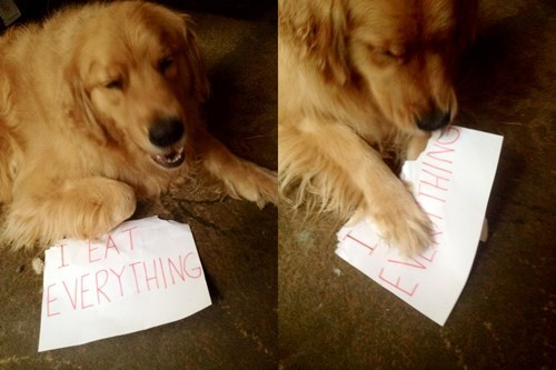 dogs-15057 dog-shaming-30 - 8314716928