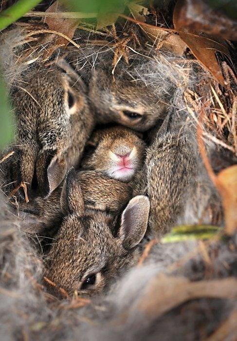 cute-10412 bunny-1410 - 8314720256