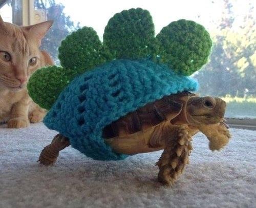 cute-10412 turtle-509 - 8314722048