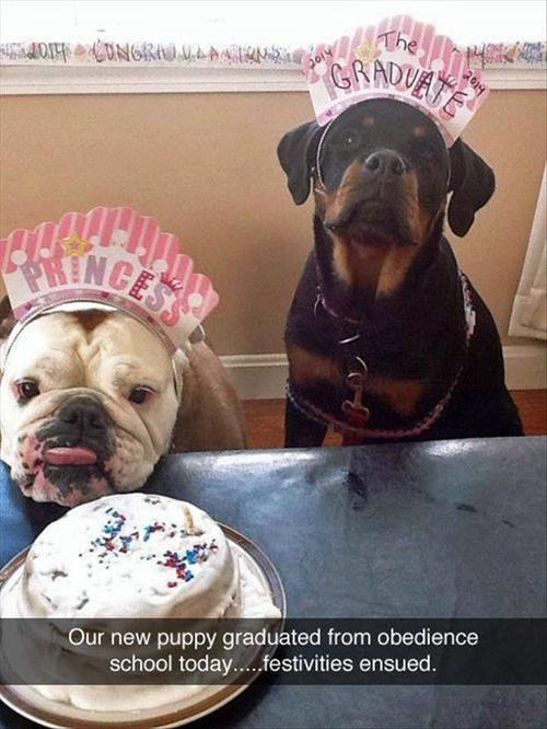 cake,dogs,Party