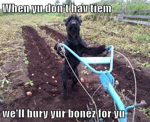 bones dogs - 8315291392