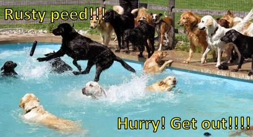 dogs pee swimming - 8315623936