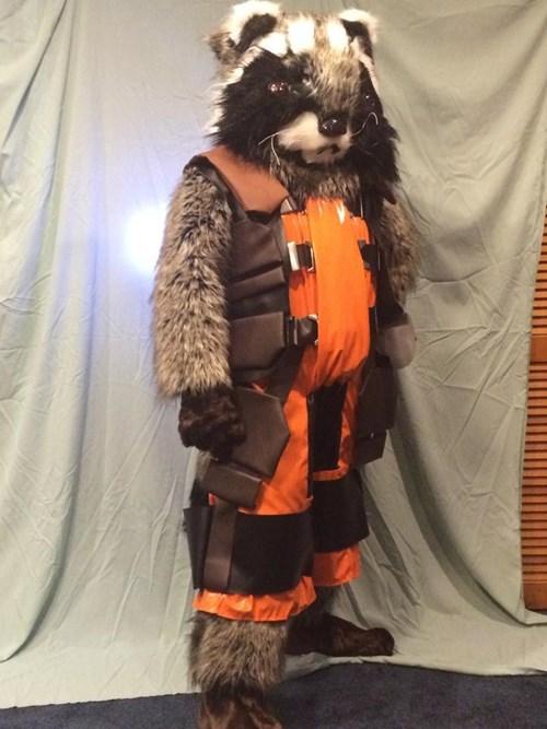cosplay rocket racoon - 8315641088