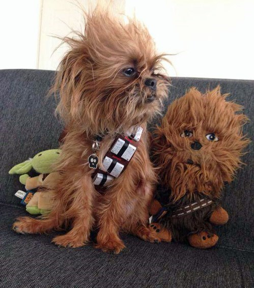 dogs cosplay chewbacca - 8315660800
