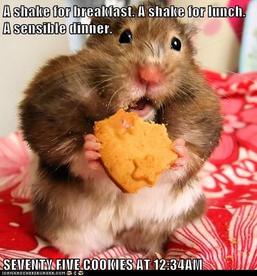 diet,hamsters,cookies