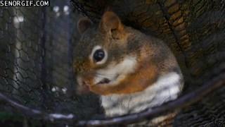Little Squirrel Keeps Clean