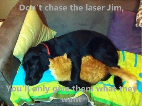 Don't chase the laser Jim, You'll only give them what they want