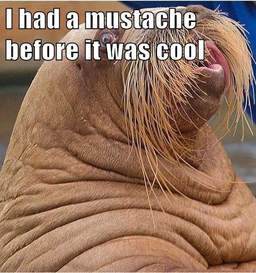 walreus moustache hipster - 8316416768