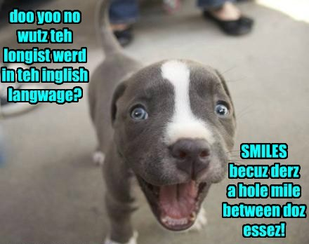 dogs english mile smiles caption - 8316472064