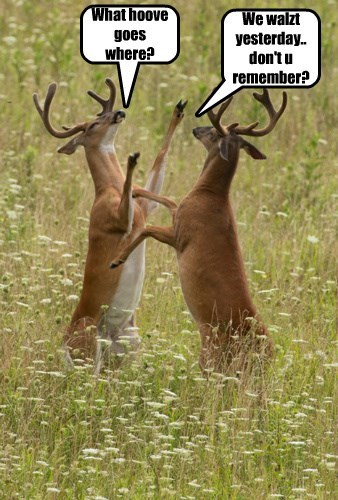 Awkward deer dance - 8316555264
