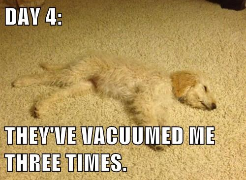 DAY 4: THEY'VE VACUUMED ME THREE TIMES.