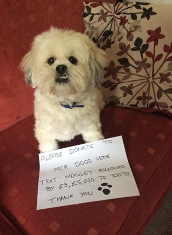 dogs,social media,the internets,pay it forward,manchester dog home