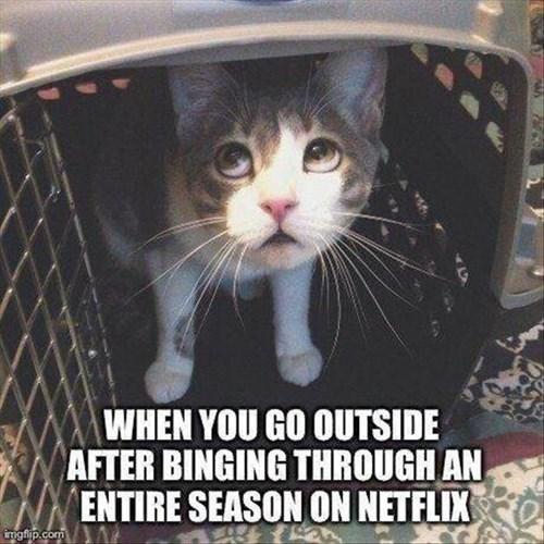 TV,netflix,Cats
