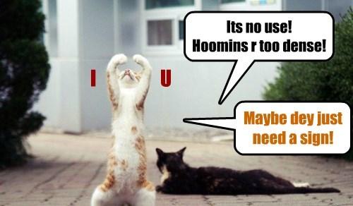 kitten love Cats - 8316742912
