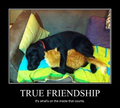 TRUE FRIENDSHIP It's what's on the inside that counts.