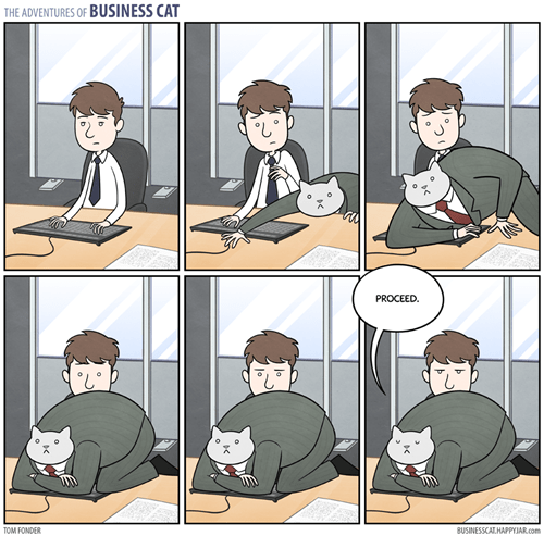 Business Cat Cats Cat Nap - 8316880128