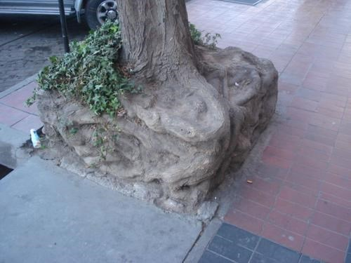 puns,tree,square root