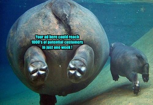 ads hippo - 8317347328