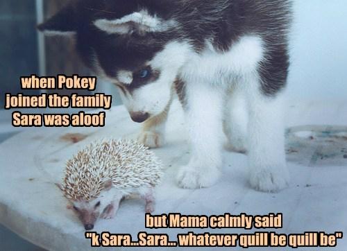 dogs puns hedgehog - 8317541632