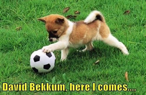 dogs soccer football - 8317969664