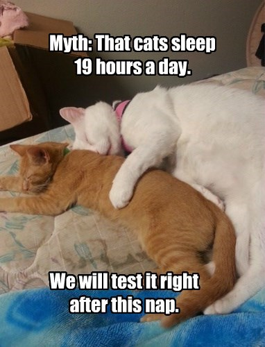 Cat - Myth: That cats sleep 19 hours aday. We will test it right after this nap.