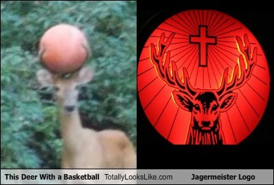 This Deer With a Basketball  Totally Looks Like Jagermeister Logo