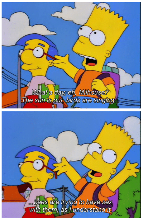 birds and the bees,the simpsons,funny