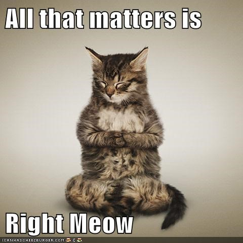 buddha zen Cats - 8319021568