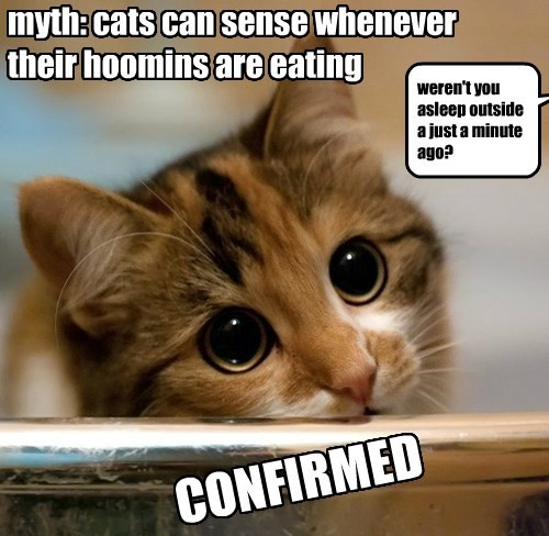 Cat - myth: cats can sense whenever their hoomins are eating weren't you asleep outside a just a minute ago? CONFIRMED