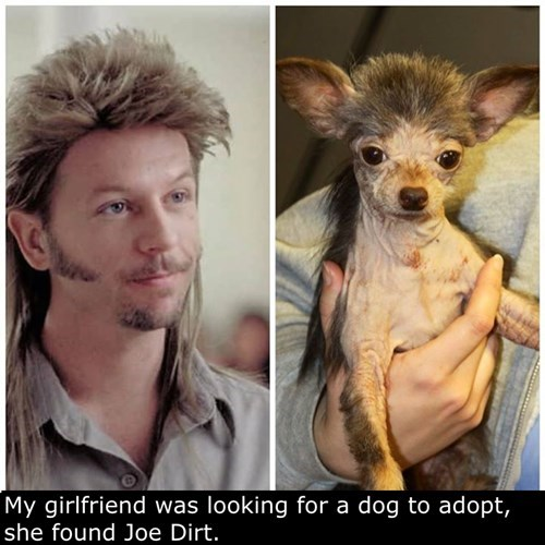dogs,poorly dressed,mullet,Joe Dirt