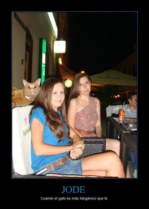 bromas Memes gatos animales - 8319333888