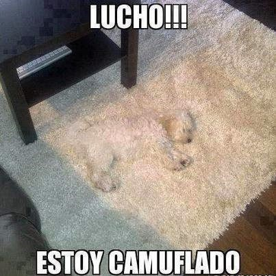 bromas perros Memes animales - 8319348224